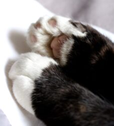 tired paws